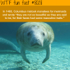 columbus mistook manatees for mermaids wtf fun