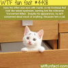 concerned kitten wtf fun facts