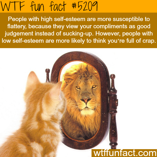 Confident people are more susceptible flattery - WTF fun facts