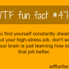 constantly dreaming about your work wtf fun