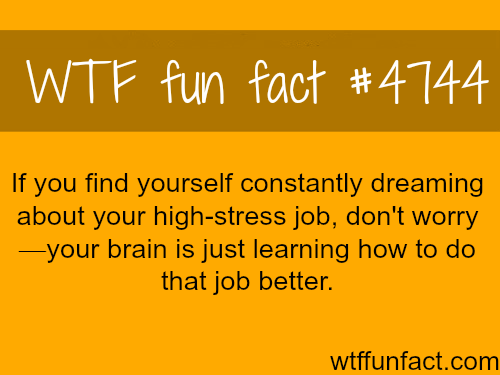 Constantly dreaming about your work? - WTF fun facts