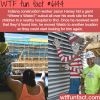 construction worker hides waldo on site for the