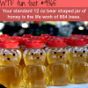 crazy fact about honey wtf fun facts