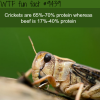 crickets wtf fun fact