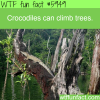 crocodiles can climb trees wtf fun facts