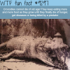 crocodiles wtf fun fact
