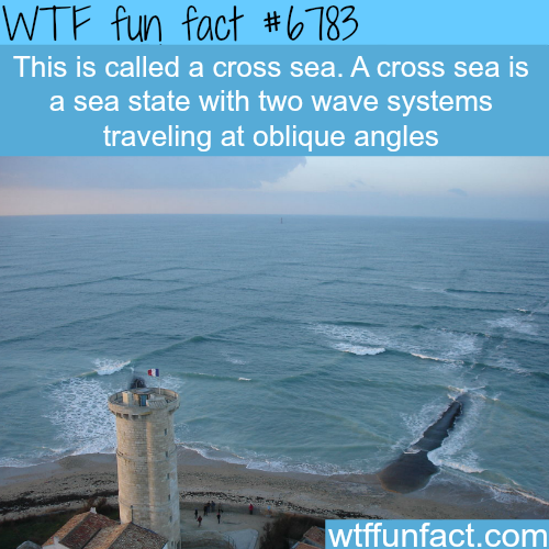 Cross sea - WTF fun fact