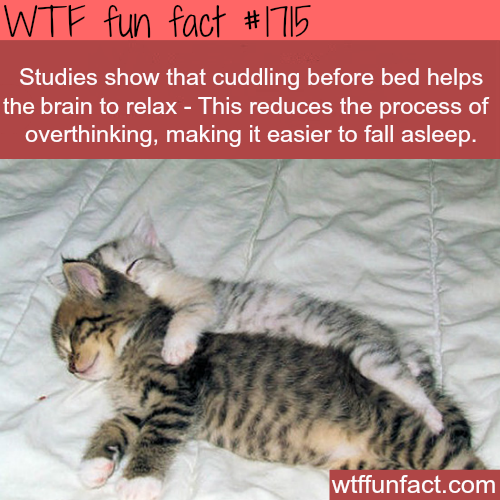 Cuddling before bed facts - WTF fun facts