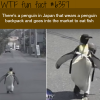cute penguin in japan wearing a backpack wtf fun