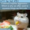 cuteness inspires aggression