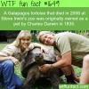 darwins tortoise died in 2006 wtf fun facts