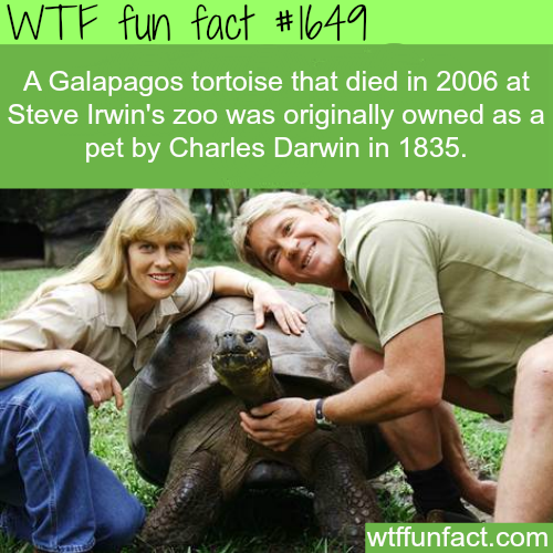 Darwin's tortoise died in 2006 - WTF fun facts