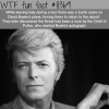 david bowie wtf fun facts