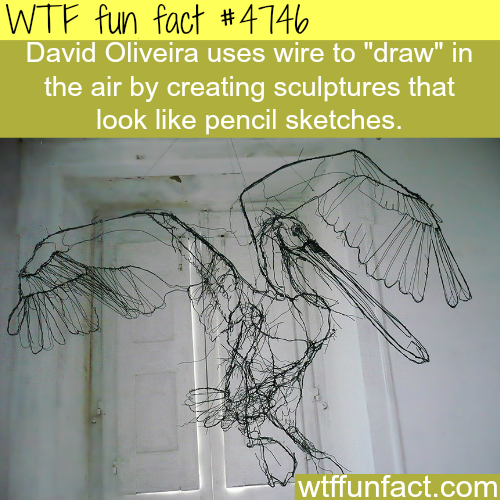 David Oliveira's art - WTF fun facts