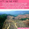 deforestation in china wtf fun facts