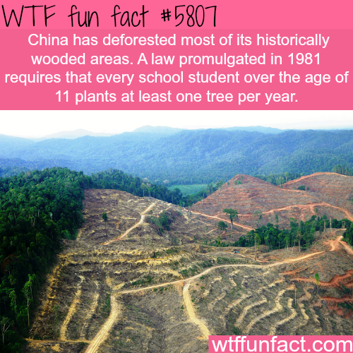 Deforestation in China  - WTF fun facts