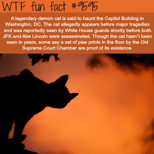 Demon Cat in Capitol Building in Washington - WTF fun fact