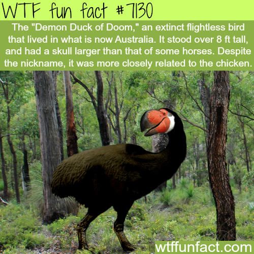 Demon Duck of Doom - WTF fun facts