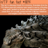 dinosaur mummy wtf fun facts