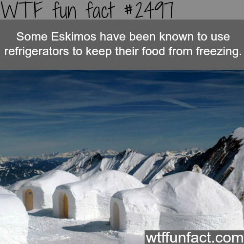 Do Eskimos use refrigerators? - WTF fun facts