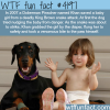 doberman pinscher saves a baby girl from snake