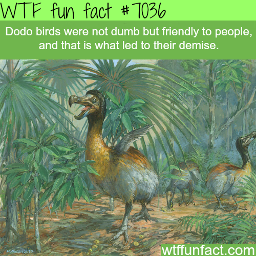 Dodo bird - WTF fun facts