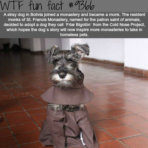 Dog facts - WTF fun facts