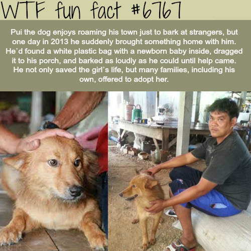Dog finds a baby in a plastic bag - WTF fun fact