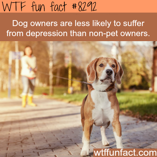 Dog owners - WTF fun facts