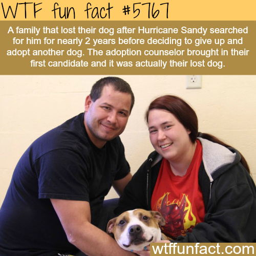 Dog reunited with it's owners after two years of search - WTF fun facts