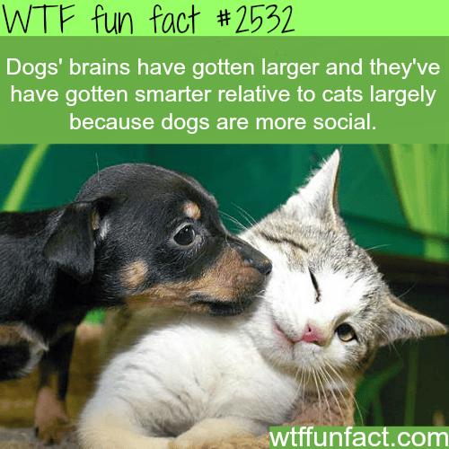 Dog S Brain Vs Cat Fun Facts