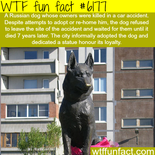 Dog waits for it's owners for 7 years - WTF fun facts