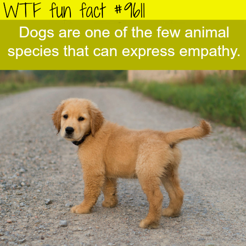 Dogs are one few animals that express empathy - WTF fun fact
