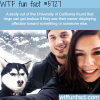 dogs can get jealous wtf fun facts