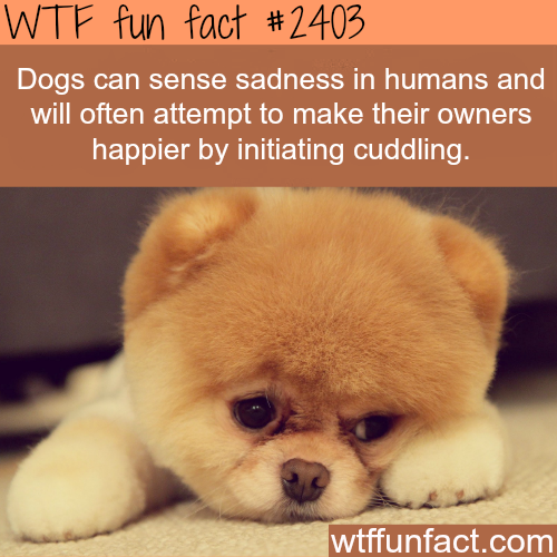 Dogs can sense sadness in humans - WTF fun facts