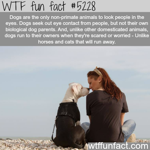 Dogs facts - WTF fun facts