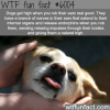 dogs get high when you rub their ears wtf fun