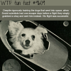 dogs in space wtf fun fact