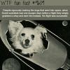 dogs in space wtf fun fact