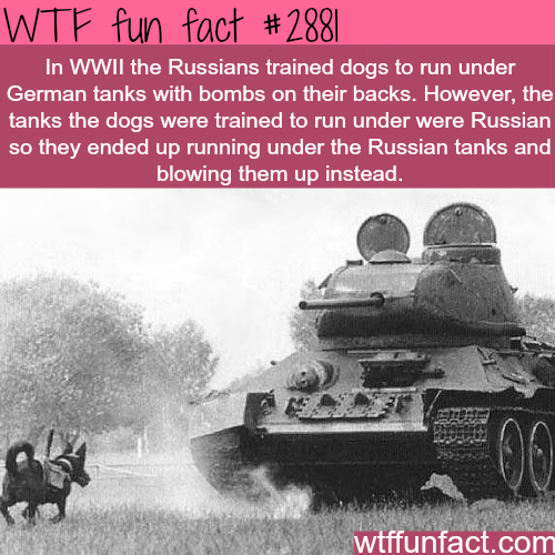 Dogs in World War Two -  WTF fun facts
