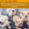 dogs think they are your family wtf fun fact