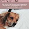 dogs wtf fun fact