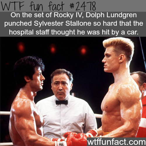 Dolph Lundgren VS Sylvester Stallone - WTF fun facts