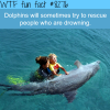 dolphins will try to rescue drowning people wtf