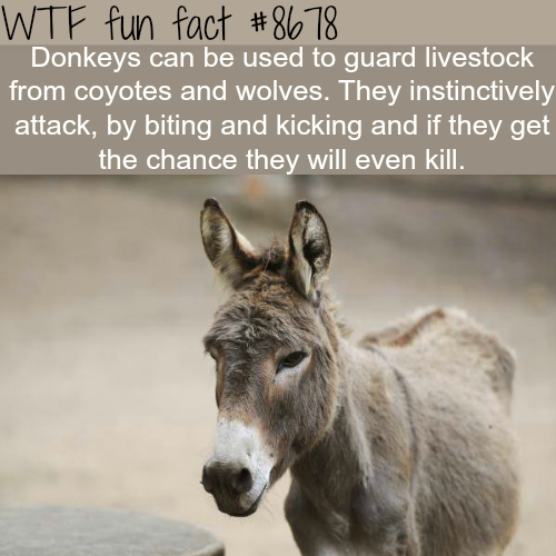 Donkeys as guard animals - WTF fun facts