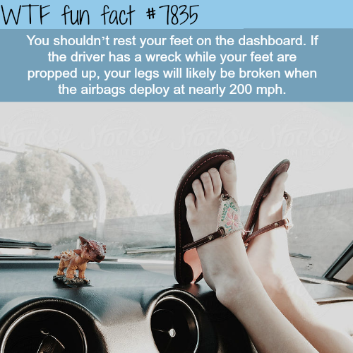 Don't put your feed on the car dashboard - WTF fun facts