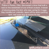 dove built a nest on a police car wtf fun facts