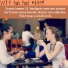 drama lowers your iq wtf fun facts