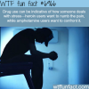 drug users and how they deal with stress wtf fun