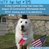 duke the dog wtf fun facts